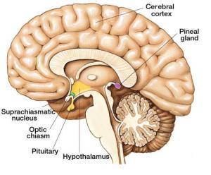 Hypofyse